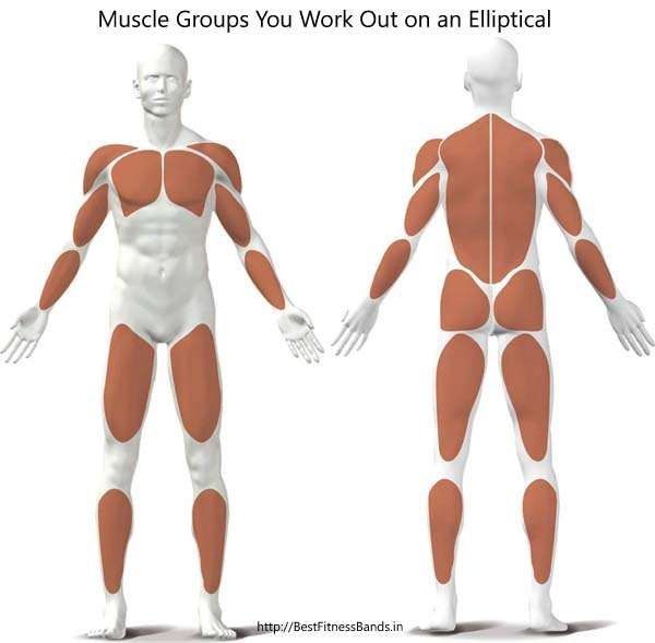 Muscle Groups Involved in Elliptical Cross Trainer Workouts